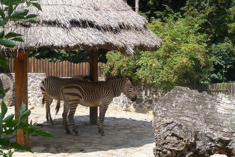 Zoologická záhrada Bojnice